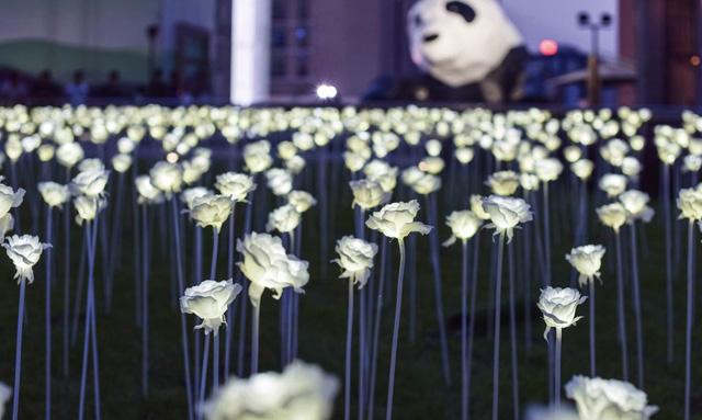 Những hoa hồng được làm từ đèn LED